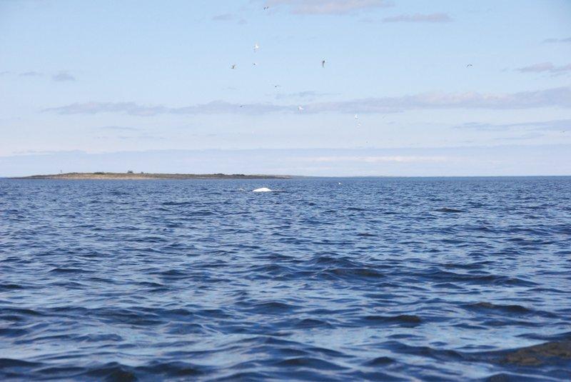 13:49. Обогнули маленький остров Ольховец, повернули направо и идём вдоль Северного Коловара.