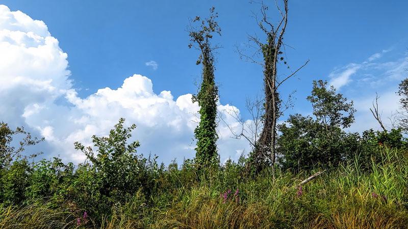 Смотрите внимательно, покажу только один раз (ибо страшно сие) - так выглядят зомбаки в мире деревьев.