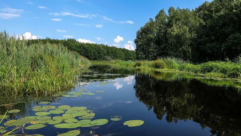 Возвращаюсь в русло Вопши. Сплавляюсь по течению, хотя течение реки обнаружить сложно.