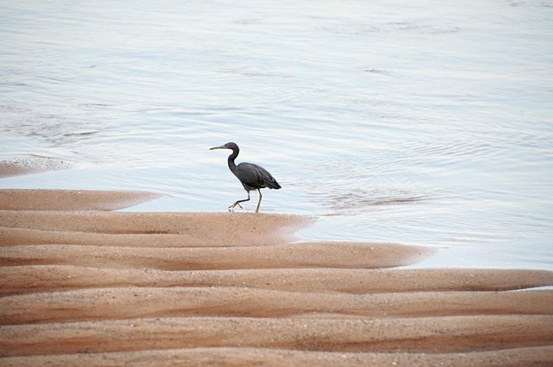 Удивительно много птиц, хотя и достаточно пугливых, не подпускающих на дистанцию фотовыстрела.