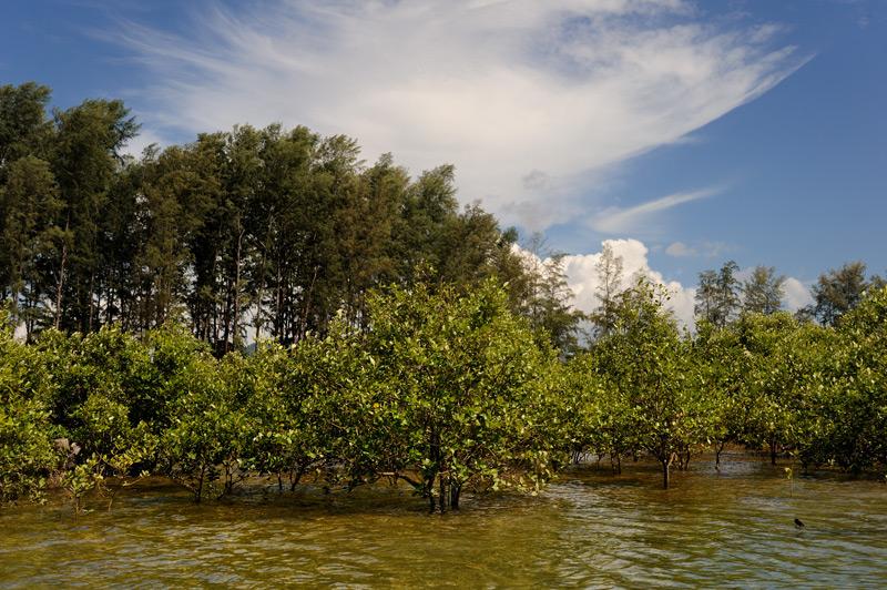 Небольшие мангровые болотца.