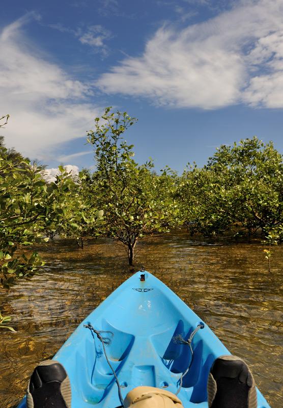 Без лишнего размаха и роскоши, как на соседнем южном побережье, но побултыхаться на каяке среди редколесья мангровых кустов тоже достаточно интересно.