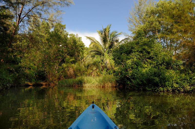 Вода зеленая и в меру вонючая.