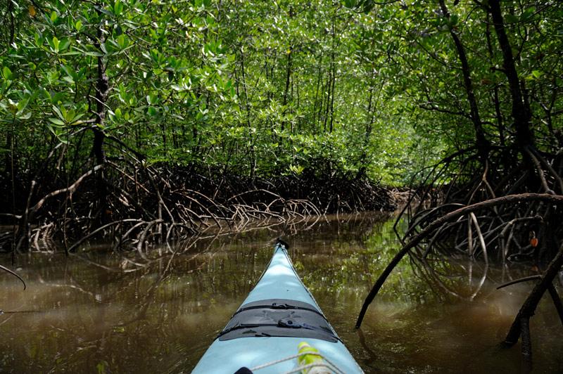 У меня уже был определенный опыт весельной медитации средь мангровых корней. При этом каждый раз хотелось оказаться в закрытом каяке. Причиной тому не столько стремление к большей скорости или каким-то мореходным качествам, сколь нежелание долгими часами жарить на солнце свои задние ноги.