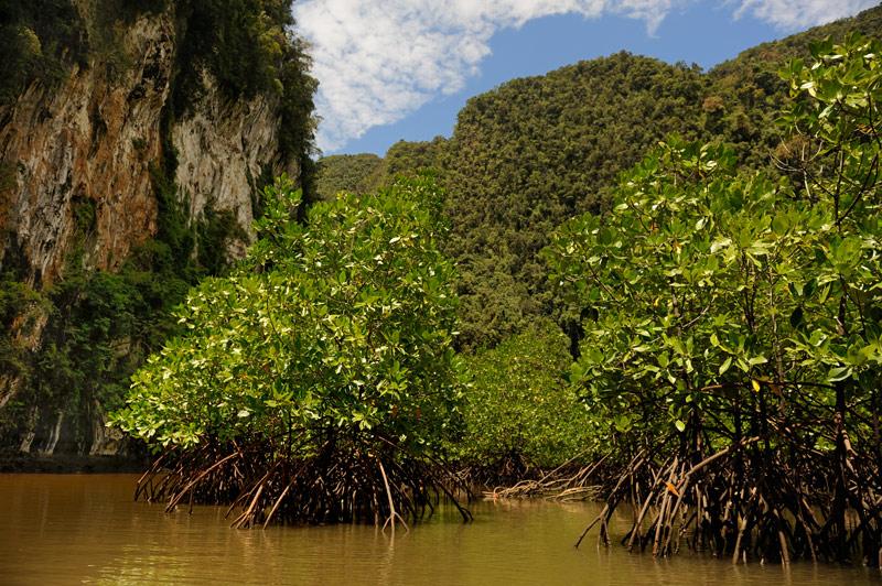 Вода в мангровых зарослях, естественно, соленая.
