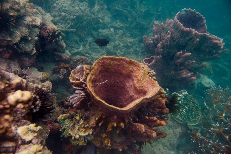 Всякую подводную нечисть лучше снимать в более подходящие сезоны — когда меньше планктона и вода прозрачнее.