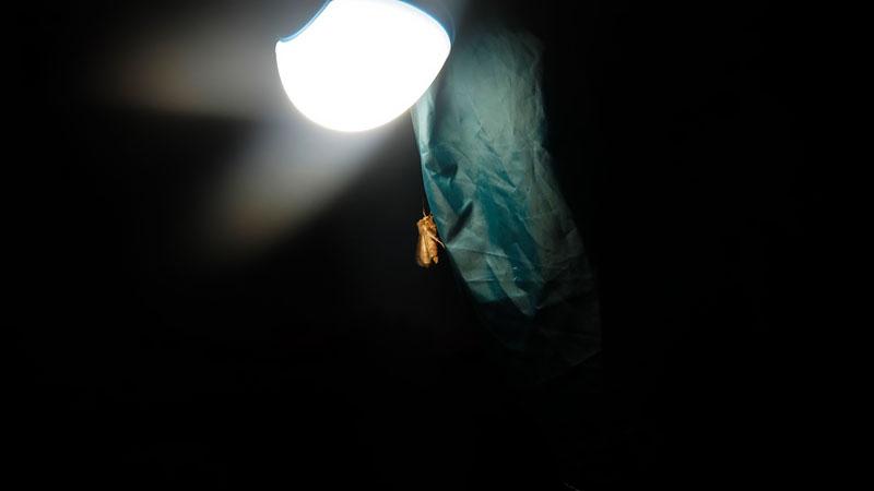 Пришлось разбивать лагерь уже при свете лампы. Включил лампу в режиме форсажа. Не как днём, конечно, но никаких проблем от недостатка света мы особо не испытывали. Это, конечно, фигово – по темноте разбивать лагерь. Но с современными светодиодными источниками света – это не трагедия.