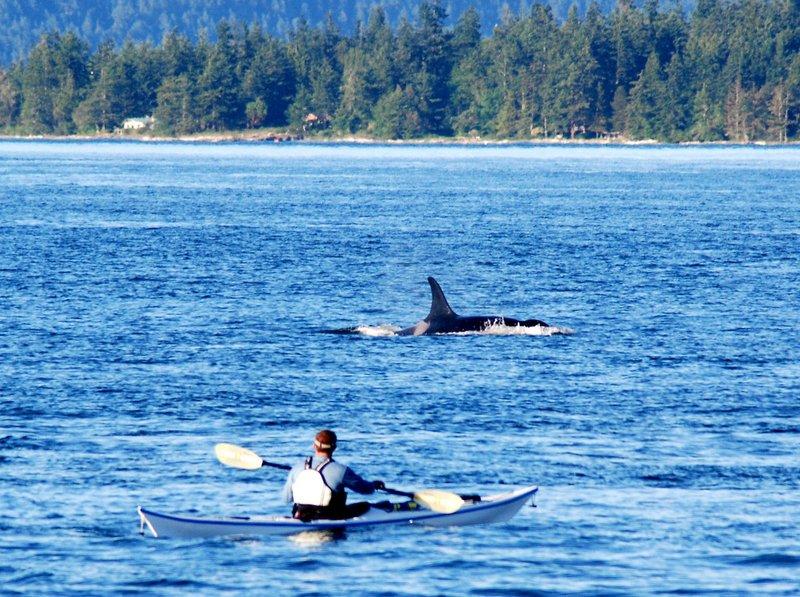 Каяк море, киты, касатки