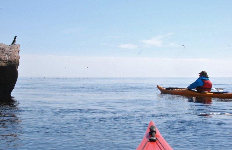 Первый раз видим на Белом море птичий базар. Пусть и не такой многочисленный как в Арктике, но всё же базар.