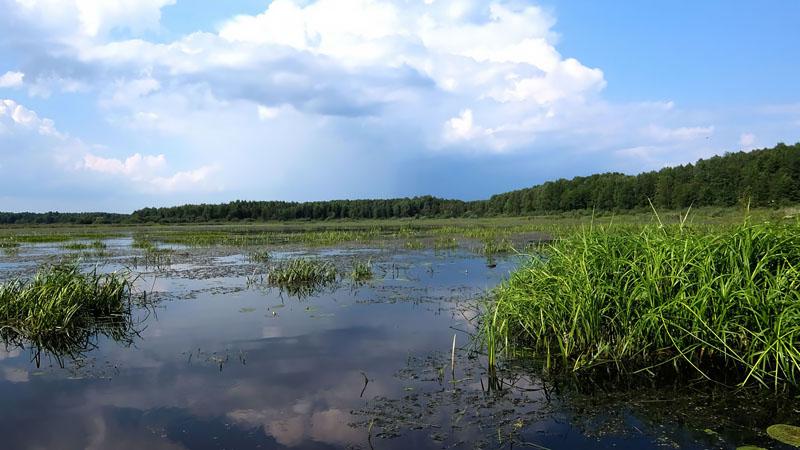 Снова перемещаюсь мимо заросшего озера Фомино.