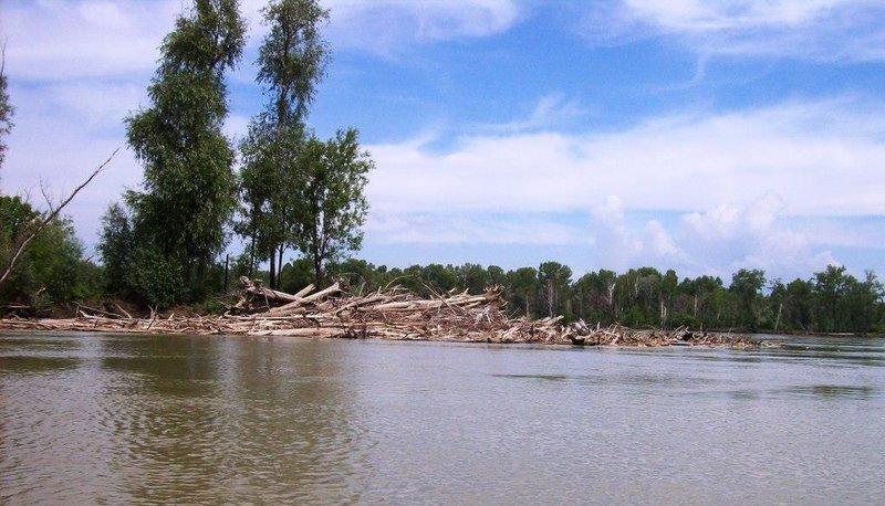 Дров на реке море, нашли подходящий бережок, встали, разожгли костерок, палатку поставили, перекусили и на бочок. Течение большое, снасти все все перепутает насмерть, не до рыбалки нам сегодня.