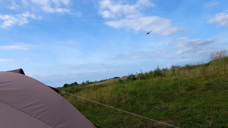 Наблюдаю, как стрекоза охотится на подёнок в самой гуще их роя. Какое совершенство движений в воздухе! Поймать хаотично двигающуюся мелкую поденку – это просто высший пилотаж.