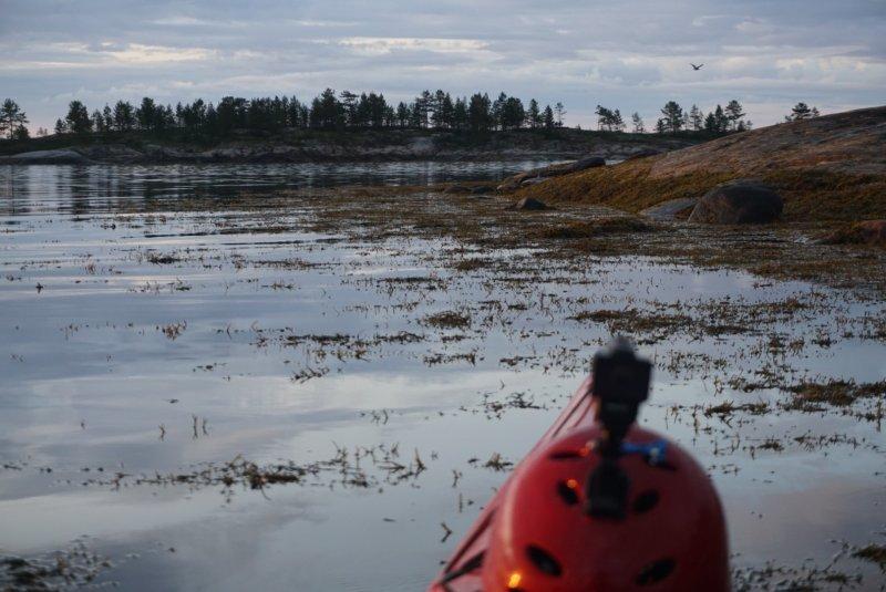 Наобщавшись с зайцем, я погреб дальше и дошел до группы островов. Здесь меня тоже ждал зверь, на этот раз крупный тюлень, он недовольно фыркал, плавал вокруг и высовывал голову. Даже когда я вышел на берег и развел костер, он все равно был рядом, может 5 метров от берега и продолжал фыркать. Не знаю как спать ложиться не сожрет ли он меня ночью, все-таки крупная туша. А фотки его пока нет, темно уже, кроме головы его из воды не видно.