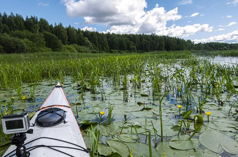 Люблю своеобразную поэзию водных зарослей и болот – ничего не могу с собой поделать.