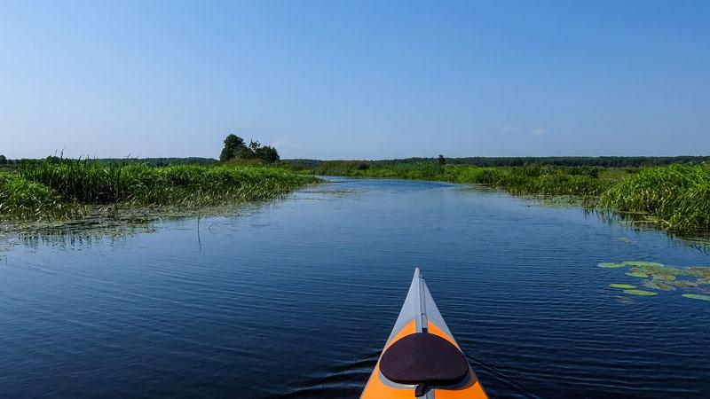 Русло Вопши - это практически единственное чистое от растительности пространство в озере.