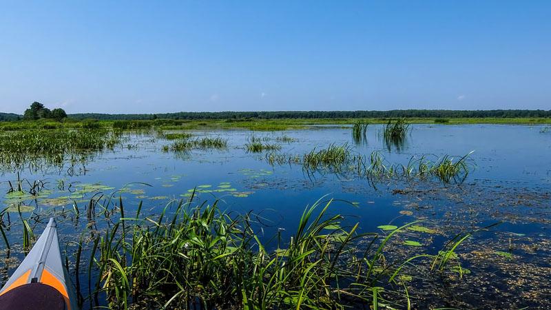 Мда… Вместо открытого водного пространства вижу сплошь поросшую растительностью лужу, которая скоро превратится в полноценное болото.