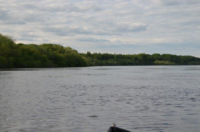 Вечером лось пытался переплыть реку. Я был неосторожен - спугнул слишком рано.