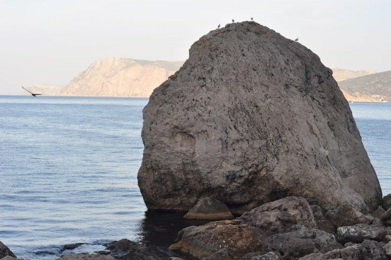 В бухте Инжир (пляж Инжир дальний)