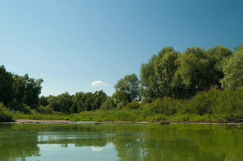Сделав небольшой марш-бросок доплыли до острова:http://maps.yandex.ru/-/CVVhF41AВид с воды на кусочек берега восточной части острова. Вода к реке зацвела и это придало некую пикантность фотографии. :)))