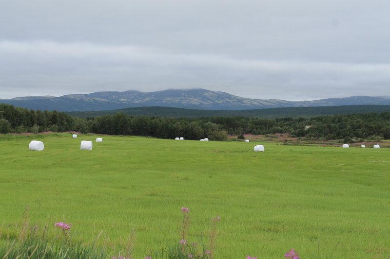 А это по дороге сделали фотку, со стороны выглядит как какая-то инопланетная территория, на самом деле все просто, так упаковывают скошенную траву для животных.