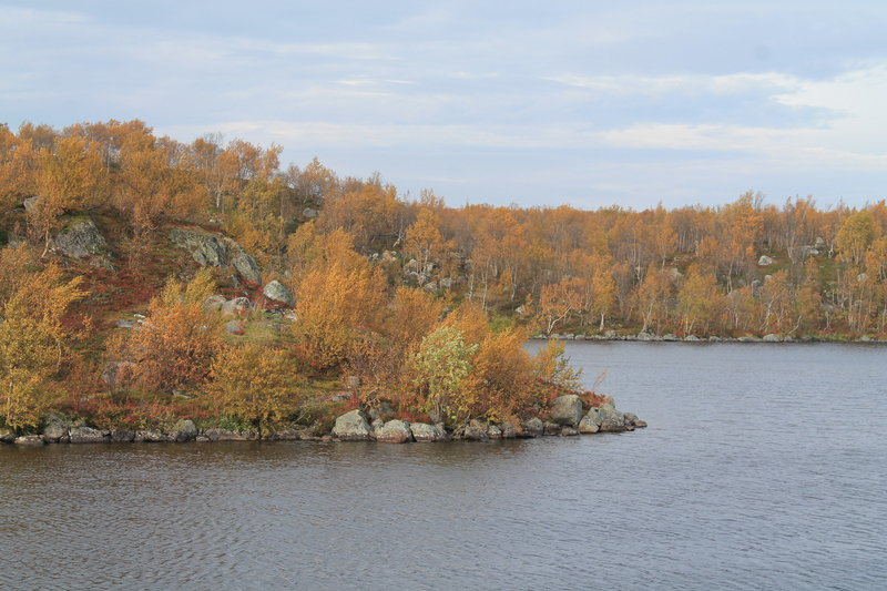 Вот такая у нас уже пожелтевшая листва, прям глубокая осень.