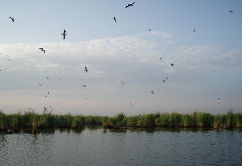 Много птичек.Там у них молодняк прячется. Грозно орут и пытаются сверху насрать прицельно . Мазилы. Непопали :-)