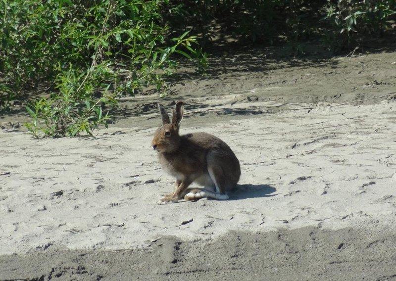 А вот и сам зайка