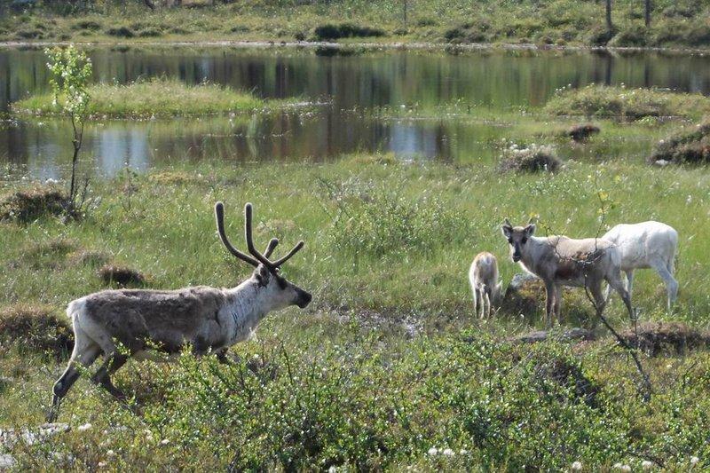 По мере приближенияк норвежской границе лес буквально на глазах начинает редеть и становитьсянизкорослым. Причём низкорослый лес нас окружает только тогда, когда дорогапроходит по вершине сопки. Когда едем в низине, то кругом привычная тайга.9:00.Пересекли финско-норвежскую границу. На границе несколько запертых таможенныхдомиков и всё. Людей нет. Перевели часы на норвежское время. Теперь у нас 8:00.Отзвонились Владу.После границыостановились посмотреть порог водопадного типа на реке. Тут же стояло ещё три машины:с финскими, норвежскими и российскими номерами. Едем дальше.Рельеф становится всё более суровым: покрытые лесом сопки уступили место скалам.У подножия скал недалеко от дороги попадается не растаявший снег.