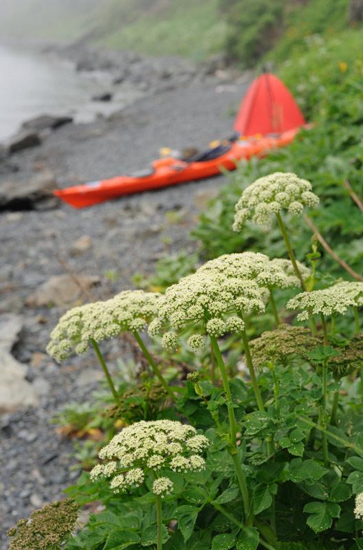 На берегах цветет и пахнет разнообразная фауна.