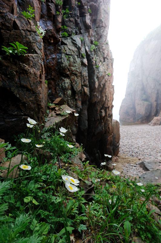 Одинокий каяк в тумане