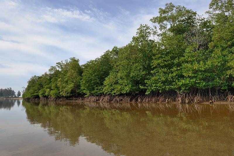 Со стороны материка песчаный вал плавно переходит в небольшие участки мангровых болот.