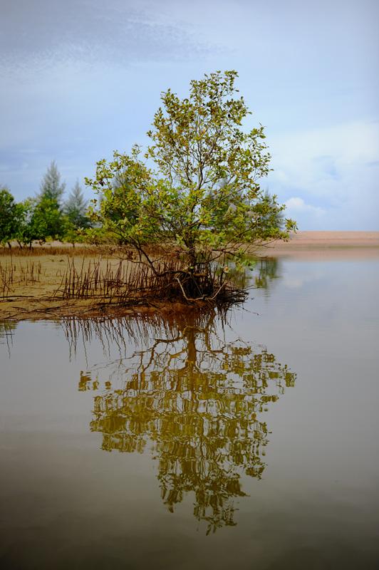 Во время отлива зловонная зеленая вода каналов уходит в море, сменяясь свежей дозой соленой воды в прилив.