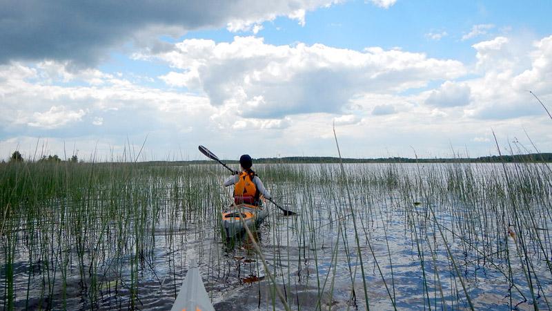Прибрежные растительные ландшафты очень разнообразны - снова озерный камыш.