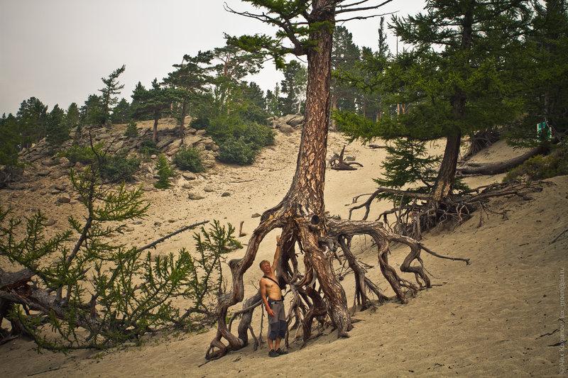 «Ходульные» деревья в бухте.