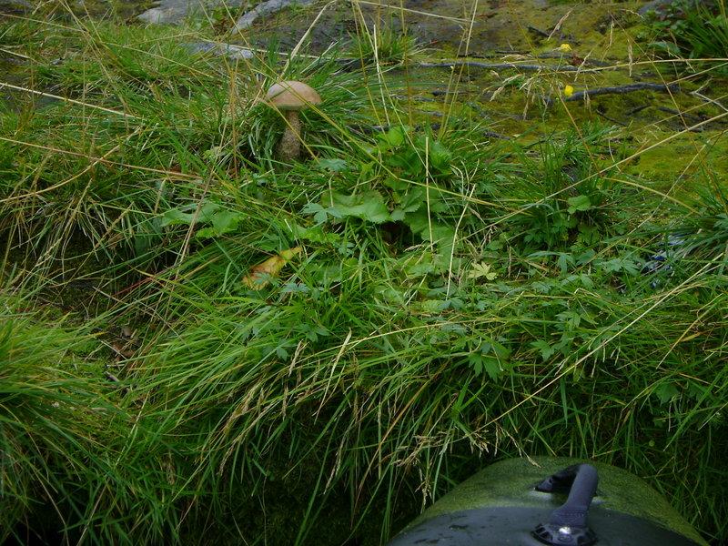 Прогулку я начал вдоль левого берега озера, чтоб увидеть растущие грибочки, да и всем показать наше богатство.