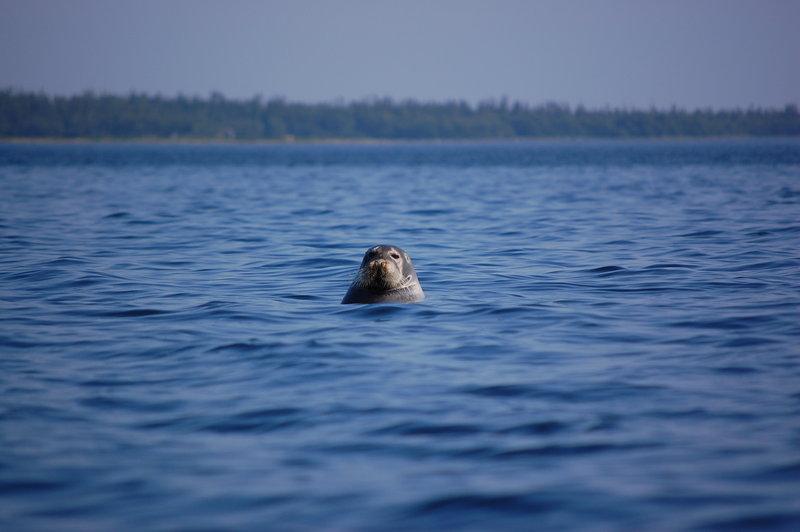 Одиночная прогулка на морском каяке. Белое море 2011 Кемь-Кузова-Соловки
