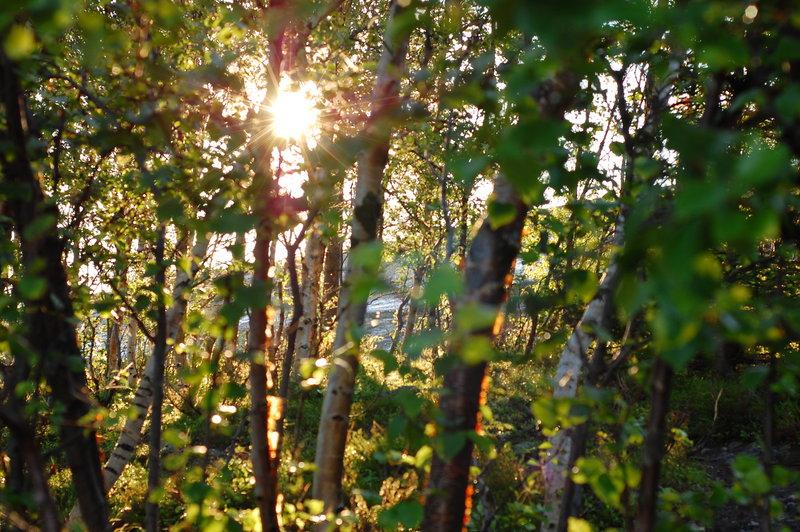 Лес на Кузовах