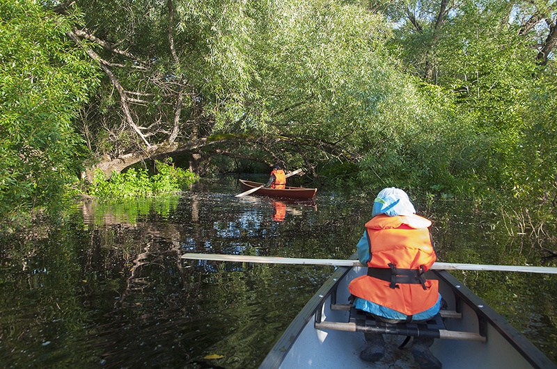 Бобровый ручей, раньше здесь была бобровая плотина и хатка, сейчас все под водой и к деревьям можно подойти на лодке.