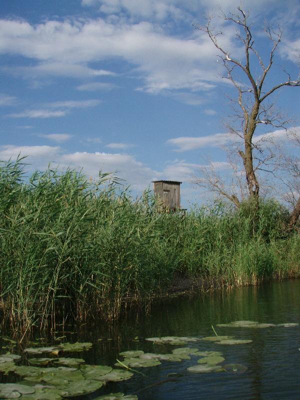 Неведомый домик на высоте метра 3