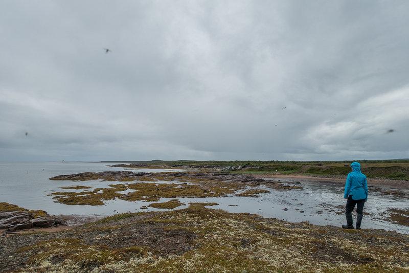 """Дождь стихает, и мы гуляем вдоль берега, отмахиваясь от туч комаров, начинаем собирать байдарку. К нам подъезжает местная пожилая пара на голубой """"копейке"""". Они идут проверять свою сеть, жалуются на рыбнадзор, просят нас последить за горизонтом.Пока мы собираем байдарку, мимо нас проходит местная бабушка и у нас завязывается длинный разговор о море, о местной природе, людях, о том, кем и как работают её дети и внуки, кто где рыбачит. Мы узнаем, что морошка зреет здесь в три """"волны"""" (точного термина, используемого ей, мы не запомнили). Первая – в лесу, вторая – в болотах, третья – у моря, и судя по цвету, в этом году больше всего должно быть у моря. Но вид голых кустов черники нас совсем не вдохновляет, в ближайшую неделю нам точно не поесть ягоды, украшавшей наш столв прошлом году.Отлив показывает чудовищную литораль, по которой нам предстоит завтра тащиться. Повсюду снуют кулики-сороки, небольшие черно-белые птицы с ярко-красными клювами, но ладно бы они просто сновали, так они бессовестно и беспрерывно пищат. Летают пилотажными группами по трое, не затыкаясь. Ковыряются в литорали, а все время, что их клюв не занят поиском ракообразных и червей, он издает мерзкие писклявые звуки. Рождается девиз нашего похода """"Кулики, идите на х.."""" Часть 1. Сосновка – Чапома. (16 – 19 июля 2015)Встаем в 4 утра, чтобы успеть к приливу, он начнется в 6. Опаздывать, равно как и начинать раньше, нам нельзя: в Горле очень сильные приливные и отливные течения, а нам поможет только приливное. Бороться с отливнымбесполезно, так что мы быстро собираемся, и так же быстро убеждаемся в ошибках наших оценок, литораль значительно больше, чем мы хотели, около 700 метров.Мы с трудом тащим байдарку, паркуем ее на границе отливной зоны, а затем я гружу на себя с помощью стропы, как коромысла, Икеевские мешки груженые вещами и большой баул. Спасибо кроссфиту, я могу поднять такой груз и не сломать спину, и даже немного ускоряюсь, чтобы проверить, хорошо ли я привязал байдарку, ведь уже начался прили"""